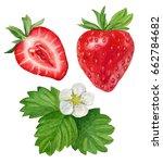 watercolor illustration of... | Shutterstock . vector #662784682