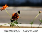 Tiger Butterfly Perched On The...