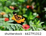 Butterfly Tiger Flying Over Th...