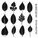 leaves silhouette set isolated... | Shutterstock .eps vector #662818858