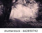 Path Through Dark Magical Forest