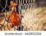 Orange Leaf Stuck In Chain Lin...