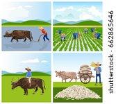 Farmers Work In Rice Fields....