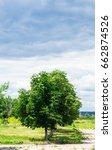 summer landscape green trees...   Shutterstock . vector #662874526