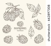 collection of raspberry and... | Shutterstock .eps vector #662897308