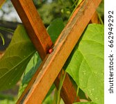 ladybug on wooden laths of a