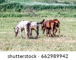 horses on the pasture landscape ... | Shutterstock . vector #662989942