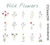 set collection of wild flowers... | Shutterstock .eps vector #662999212