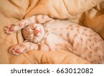 cute orange tabby kitty cat... | Shutterstock . vector #663012082