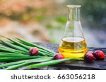 palm oil in glass bottles palm... | Shutterstock . vector #663056218