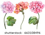watercolor illustration of... | Shutterstock . vector #663108496