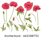 poppy flowers. set of colored... | Shutterstock .eps vector #663188752