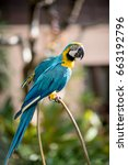 colourful parrots bird sitting... | Shutterstock . vector #663192796