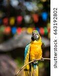 colourful parrots bird sitting... | Shutterstock . vector #663192802