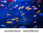 tropical fish with corals and... | Shutterstock . vector #663208102