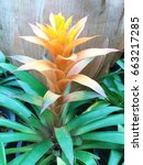 orange bromeliad flower top view | Shutterstock . vector #663217285