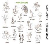 best antibacterial herbs. hand... | Shutterstock .eps vector #663249898