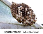 Wasps And Wasp Nest