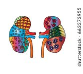 human kidney zentangle | Shutterstock .eps vector #663273955