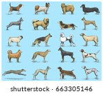 dog breeds engraved  hand drawn ... | Shutterstock .eps vector #663305146