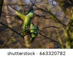 Small photo of Decades ago ring-necked parakeets were transported from India to the UK. Shortly after owners released them in the open. Wind forward and you have thousands of green birds swooping through London