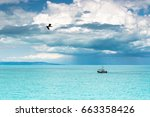 fishing sheep and flying seagull | Shutterstock . vector #663358426