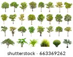 isolated tree on white... | Shutterstock . vector #663369262