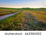 road through cultivating the... | Shutterstock . vector #663584302
