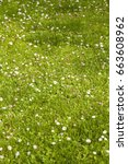 beauty of daisy flowers on the... | Shutterstock . vector #663608962