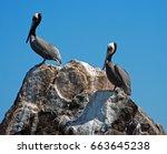Pelicans On Pinnacle Rock In...