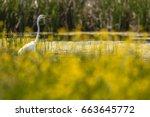 beautiful eggret  | Shutterstock . vector #663645772