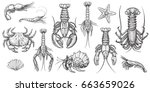 Crab, prawns, lobster, crawfish, spiny lobster, hermit crab, krill. Crustaceans vector set. Hand drawn illustrations. Collection of realistic sketches various sea animals.