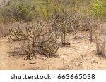 Landscape Of Caatinga Biome ...