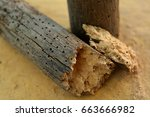 Brittle piece of wood decayed by woodworms