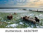 Sheep In Winter In Warder ...