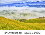beautiful lily field with... | Shutterstock . vector #663721402
