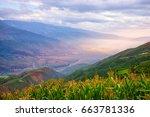 mustard and flower field in...   Shutterstock . vector #663781336
