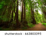 wild forest in usa. california.  | Shutterstock . vector #663803395