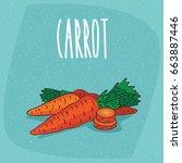 ripe root vegetables carrots... | Shutterstock .eps vector #663887446