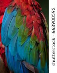 green winged macaw  ara... | Shutterstock . vector #663900592