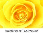 yellow rose close up | Shutterstock . vector #66390232