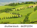 cypress curve | Shutterstock . vector #66391054