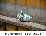 bird | Shutterstock . vector #663965185