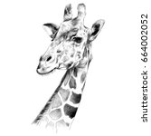 the head of a giraffe sketch... | Shutterstock .eps vector #664002052