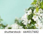 spring flowers background.... | Shutterstock . vector #664017682