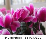 bright pink flower blooming in... | Shutterstock . vector #664057132