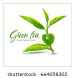 vector branch of green tea... | Shutterstock .eps vector #664058302