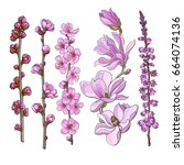 set of hand drawn pink flowers  ... | Shutterstock .eps vector #664074136