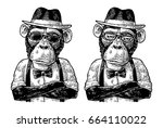 monkey hipster with paws... | Shutterstock .eps vector #664110022