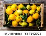 citrus. box of fresh citrus...   Shutterstock . vector #664142026